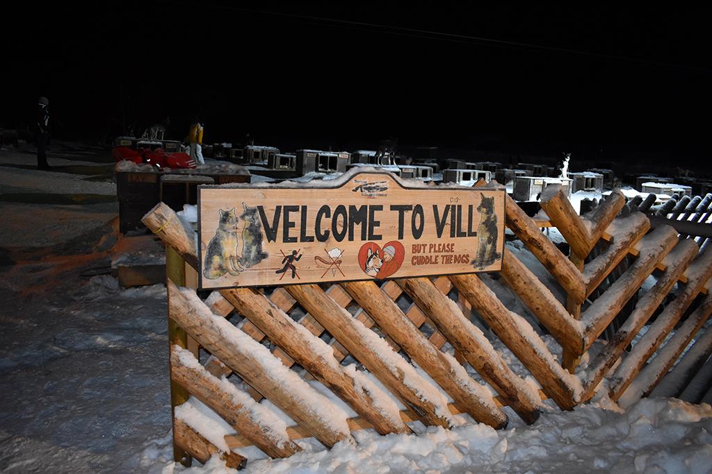 husky dog sledding in Norway at Vill in Tromso