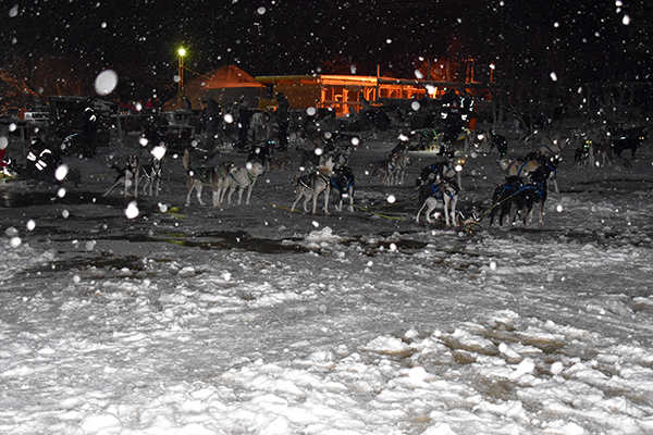 300 plus dogs in the snow