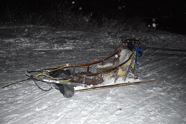 husky dog sledding in norway sled